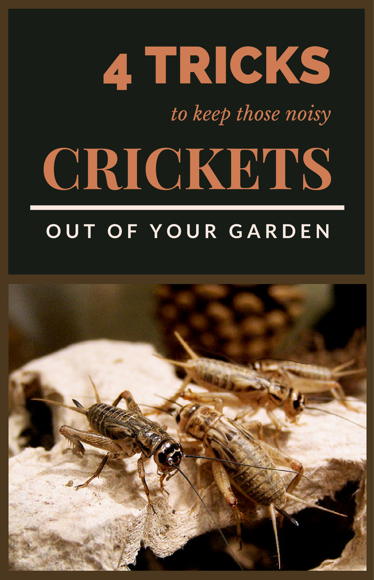4 Tricks To Keep Those Noisy Crickets Out Of Your Garden