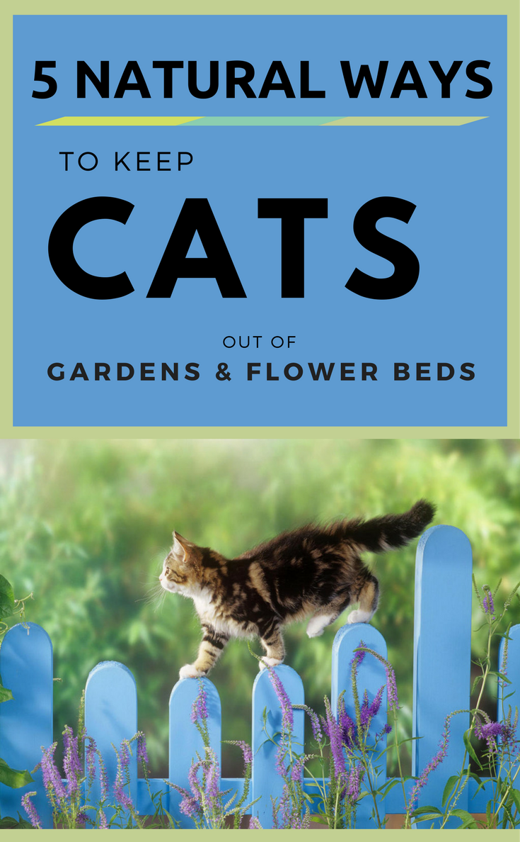 5 Natural Ways to Keep Cats Out of Gardens & Flower Beds ...