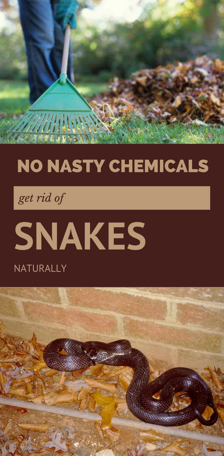 How To Get Rid Of Snakes Naturally